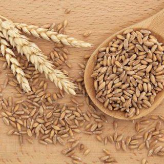 Spelt gezonder dan tarwe?
